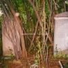 der alte Friedhof 1989